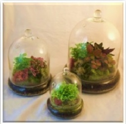 <b>Cloche Terrarium</b> from Scott's House of Flowers in Lawton, OK