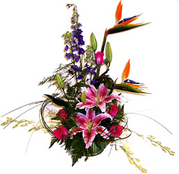 <b>Contemporary Tropical Deluxe</b> from Scott's House of Flowers in Lawton, OK