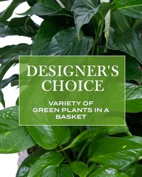 Designer's Choice - Variety of Green Plants from Scott's House of Flowers in Lawton, OK