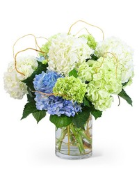 """Hello, Hydrangea!"" from Scott's House of Flowers in Lawton, OK"