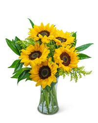 Sprinkle of Sunflowers from Scott's House of Flowers in Lawton, OK