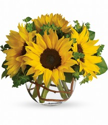 <b>Scott's Sunny Sunflowers</b> from Scott's House of Flowers in Lawton, OK