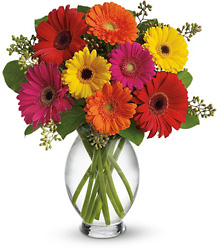 <b>Fiesta Gerberas</b> from Scott's House of Flowers in Lawton, OK