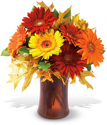<b>Autumn Gerberas</b>