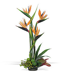 Bird of Paradise from Scott's House of Flowers in Lawton, OK