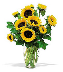 <b>Shining Sunflowers</b>